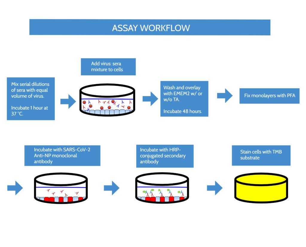 SARS-CoV-2 efficacy assay with immunostain