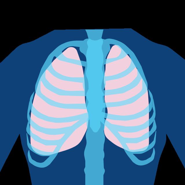 Inhalation Toxicology Studies Lungs
